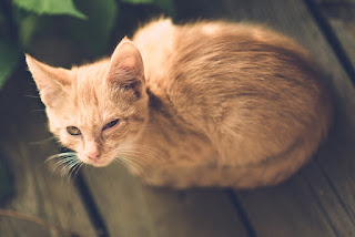 Cat/ Kitten Diarrhea Causes And How To Treat Them At Home