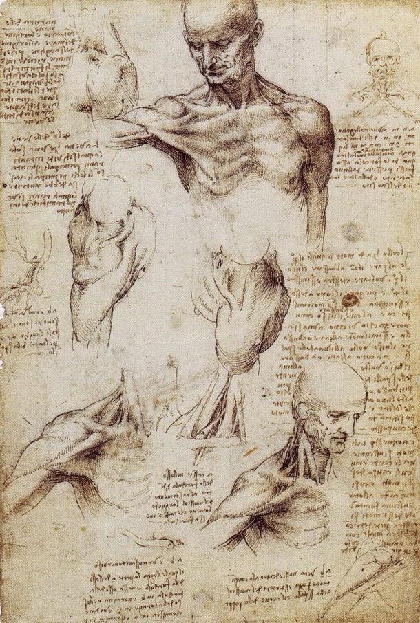 Excepcional Leonardo Da Vinci Anatomía Del Hombre Colección de ...