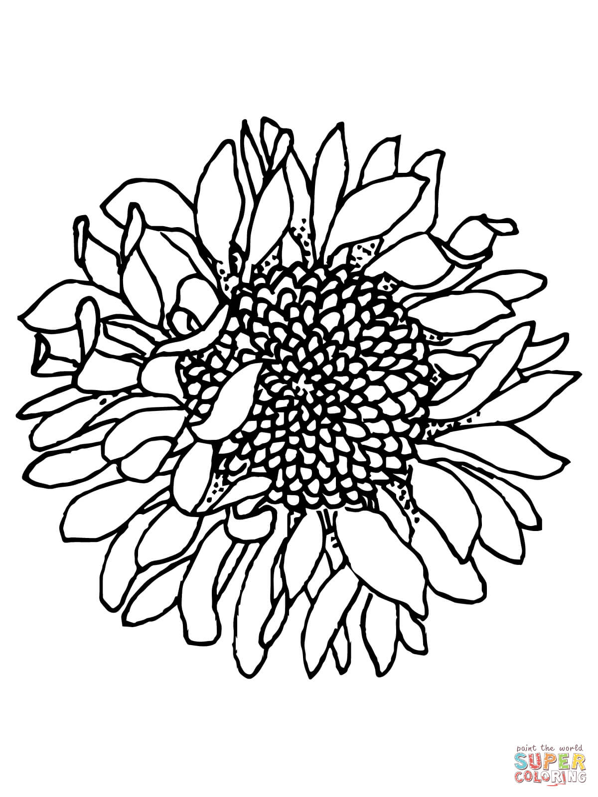 Best HD Detailed Sunflower Coloring Pages Pictures