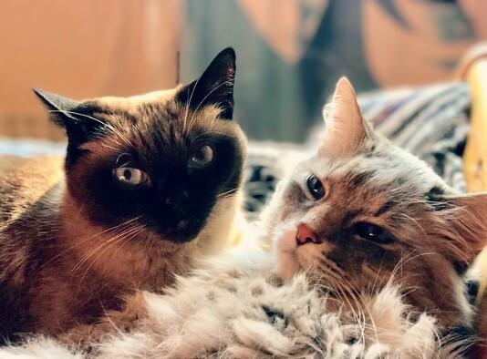 4 Perbedaan Kucing Jantan Dan Betina Paling Menonjol