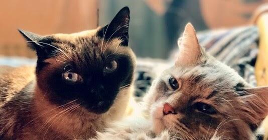 Gambar Kucing Belang godean.web.id