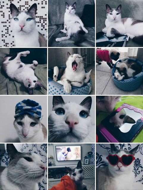 instagram de gato