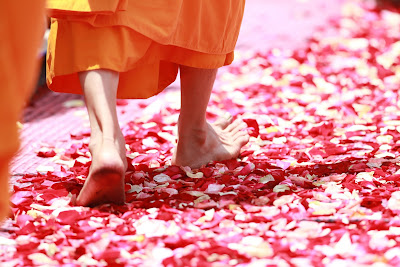 Monk walking on path of rose petals