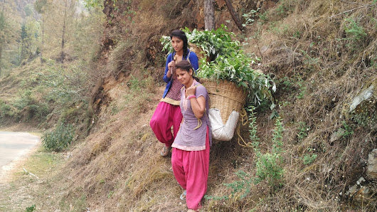 Women at work in ( Uttarkashi area ) Uttarakhand