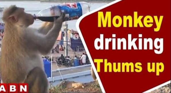 Monkey Drinking Thumsup @ Telangana Krishna Pushkaralu