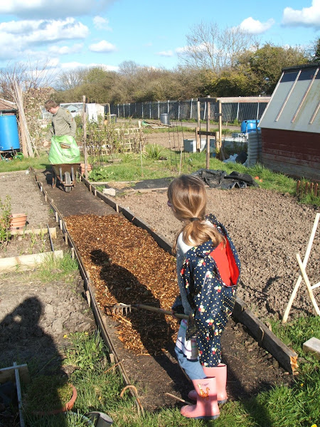 spreading woodchip on our allotment path in spring sunshine
