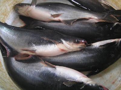 9 Manfaat Ikan Patin untuk Kesehatan
