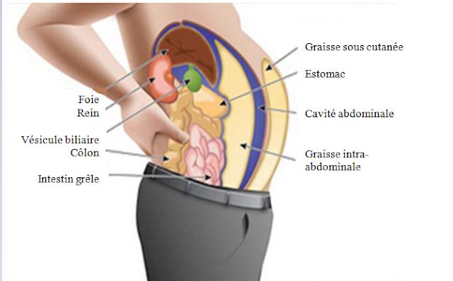 Toxines stockées dans les cellules graisseuses vous font grossir et enfler
