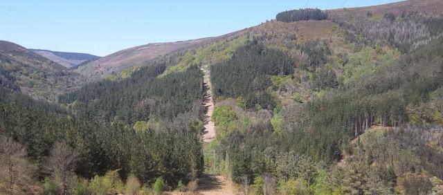 Bosque y servidumbre de paso