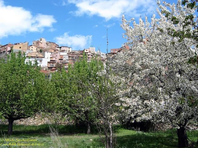 castielfabib-valencia-cerezo-flor