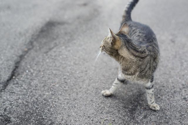 Katze Straße