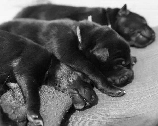 mustavalkoinen koirakuva black and white dog monochrome