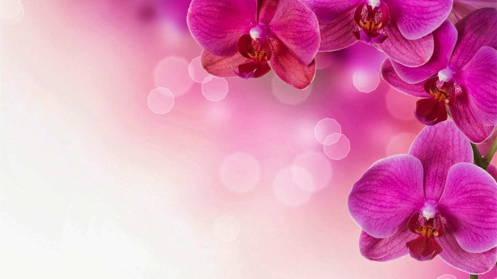 Gambar Pemandangan Wanita Cantik Toko FD Flashdisk Flashdrive