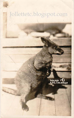 Wallaby on USS Colorado about 1925 https://jollettetc.blogspot.com