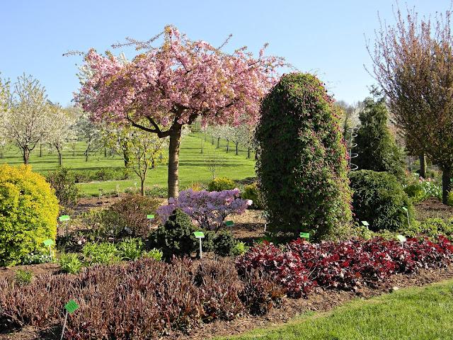 W Wojsławicach jest dużo drzew starych odmian.