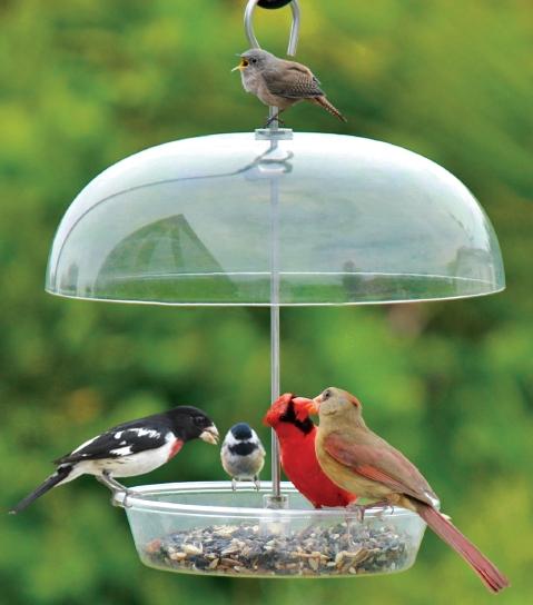 What Natural Foods Do Cardinals Eat