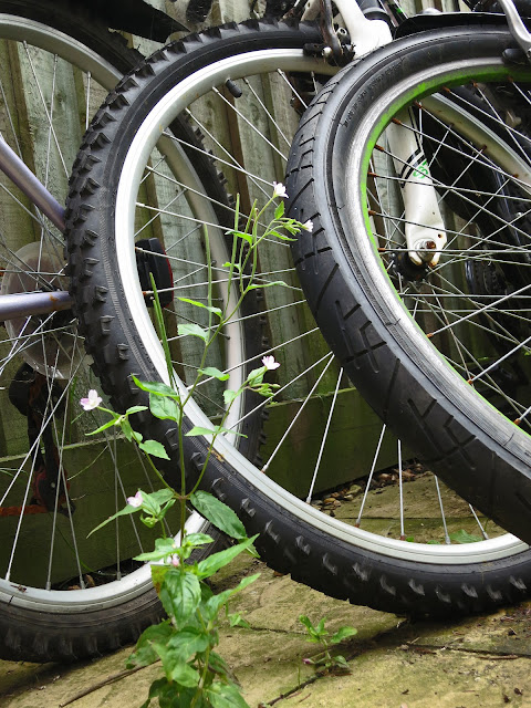 Small Willow Herb Plant and Three Bicycle Wheels