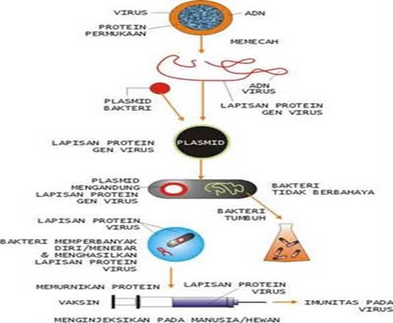 Bioteknologi Dalam Pembuatan Obat
