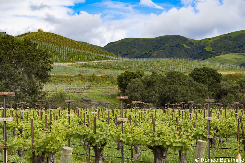 Buellton Vineyards California Weekend Getaway