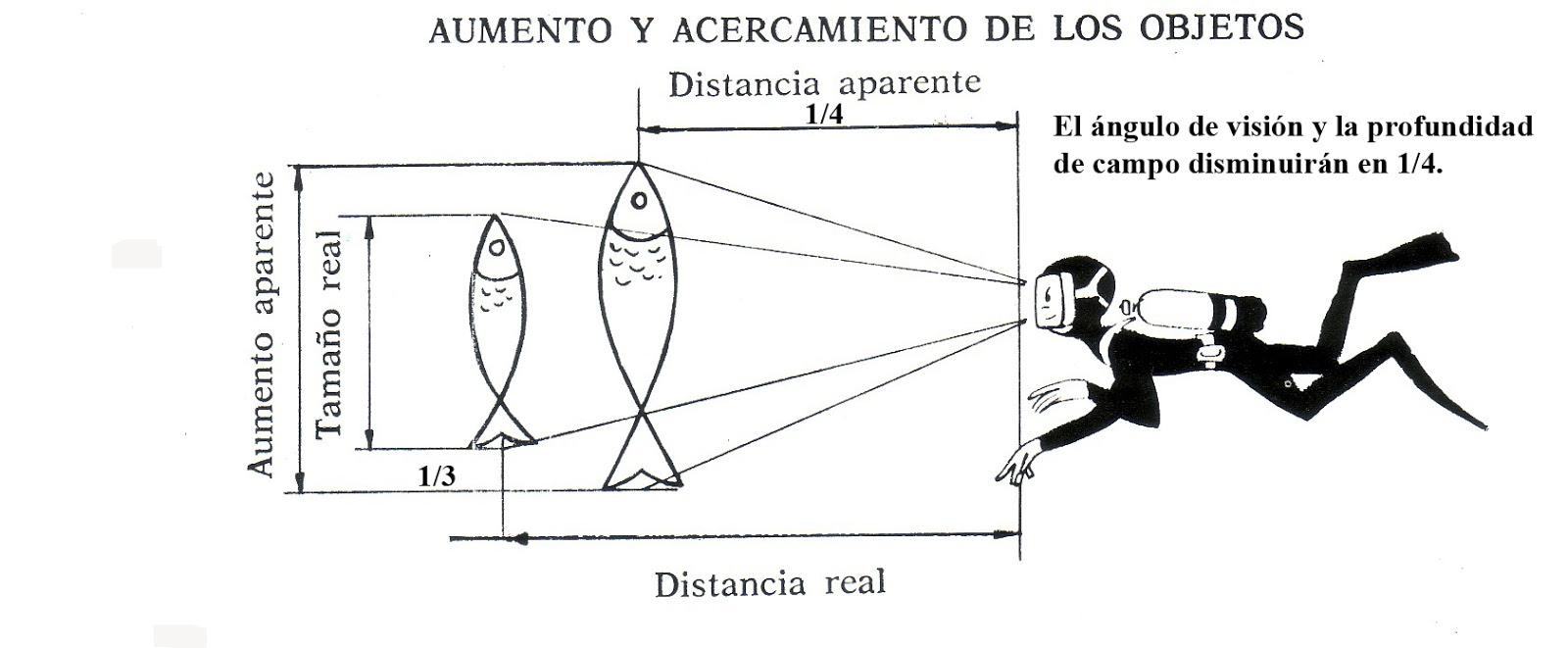 6e9d68d3f8 ... y el agua facilitando la visión. Además de cubrir los ojos, cubre  también la nariz, para permitir equilibrar la presión de los tímpanos en  inmersión.