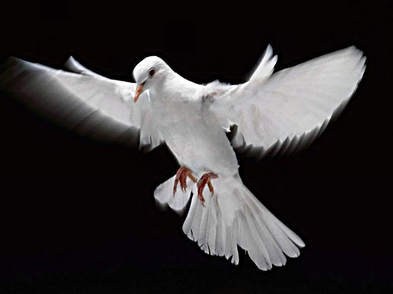 A Paz Que Trago Em Meu Peito é Diferente Da Paz Que Eu: Claudio Pacheco: O Que E Ter Paz?