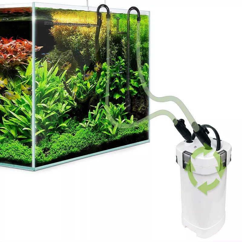 Image The Basic Facts of Best Betta Fish Tank