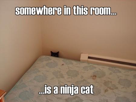 Is A Ninja Cat, funny cat meme