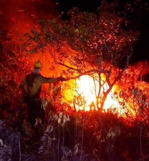 Fogo no parque nacional da Chapada