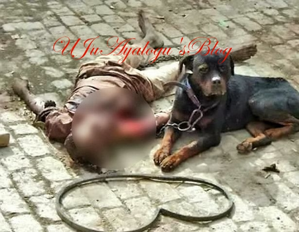 So Tragic: Dog Kills Owner, Then Eats His Flesh Before Helpless Police Officers (Photos)