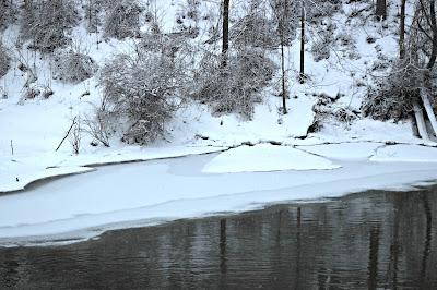 January 24, 2018 Enjoying the fresh coat of snow that fell today.