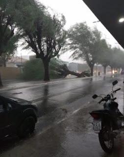 Chuvas derrubam árvores e alagam ruas de Patos