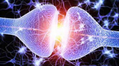 Σεροτονίνη: Το Κλειδί για την Πνευματικότητα και την Ανώτερη Συνείδηση