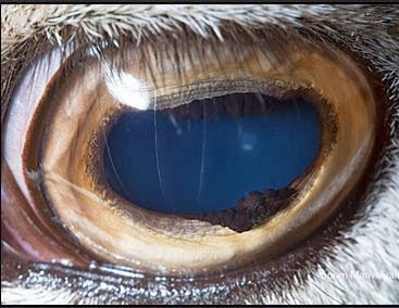 by Suren Manvelyn | Animal's Eye