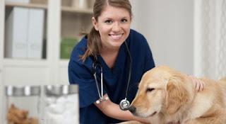 Al igual que los seres humanos, los perros pueden tener cataratas , glaucoma y otras enfermedades que amenazan la visión
