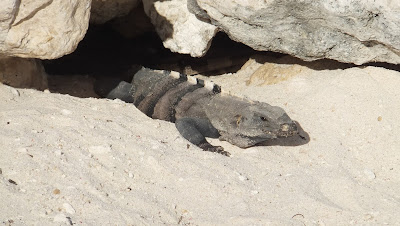 Lagarto, Bahia Principe, Akumal, Cancun, Mexico, elisaorigami