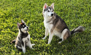 Are You Prepared of Pet Grooming and Dog Daycare?