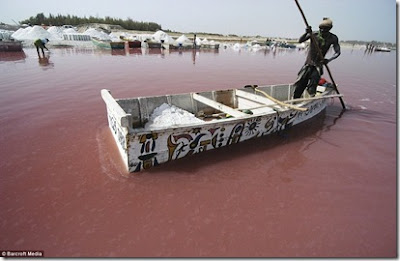 Tasik 'Pink' Di Afrika Barat