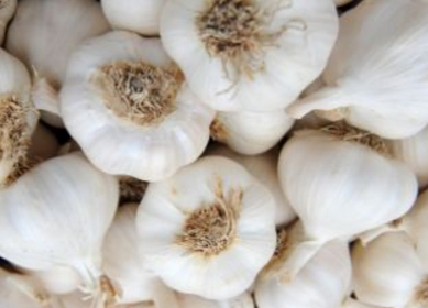 Garlic (lasun) Cures Ear Infection