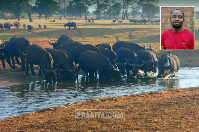 Lewat crowdfunding online GoFundMe, Mwalua berupaya untuk menggalang dana guna biaya membeli air segar untuk satwa liar di Tsova Barat.