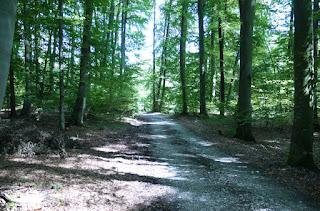 Durch die Keltenschanze Holzhausen 2 führender Weg in Richtung der südöstlichen Ecke und weiter nach Holzhausen