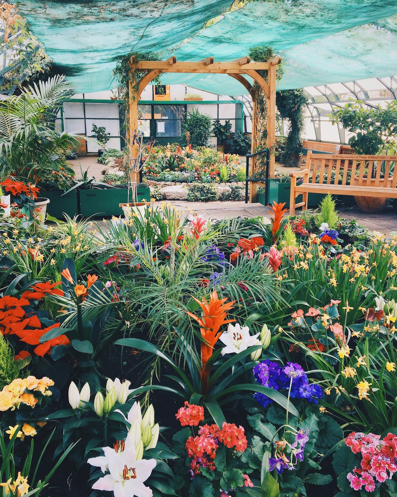 exotic flowers in greenhouse with wooden arch