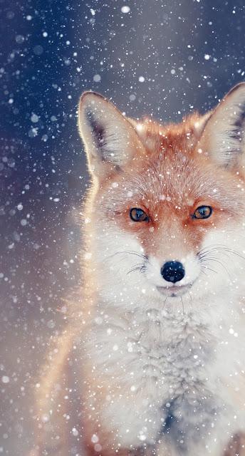 Fondos de pantalla para descargar gratis de animales