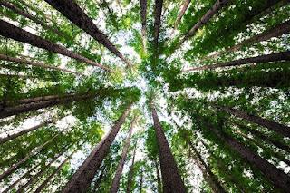 hoe-bomen-met-elkaar-praten.jpg