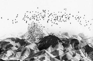 Birds, Abbas Kiarostami