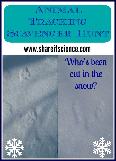 animal tracking scavenger hunt wildlife tracking with kids