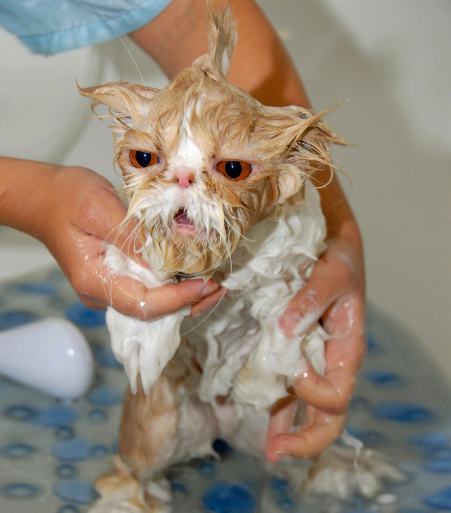 funny-wet-cats-11