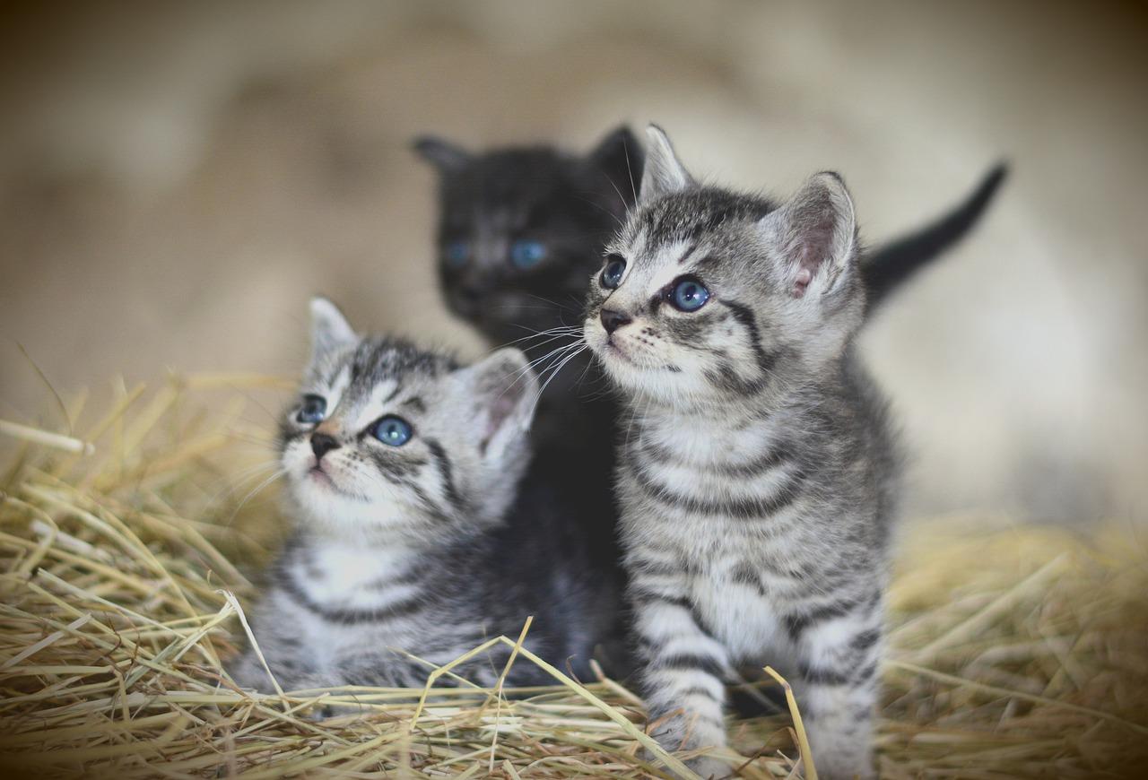 Gambar kucing paling comel di dunia