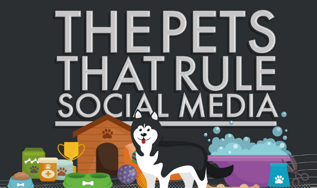 The Pets That Rule Social Media