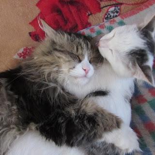 Том и Лёша