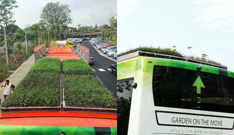 Singapore's first public buses with green rooftop gardens are now cruising along the island's roads.